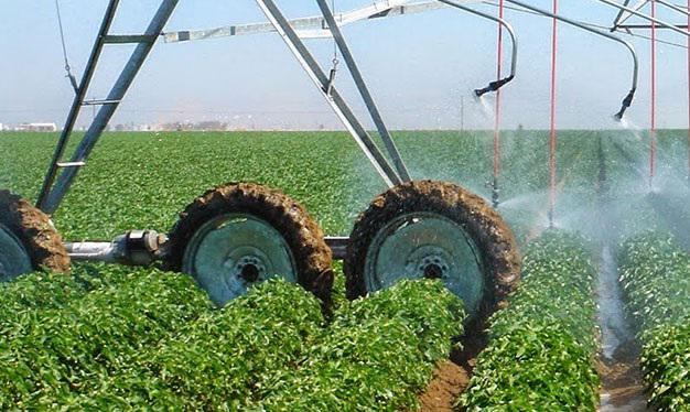 Amino Acid Water-soluble Fertilizer Market