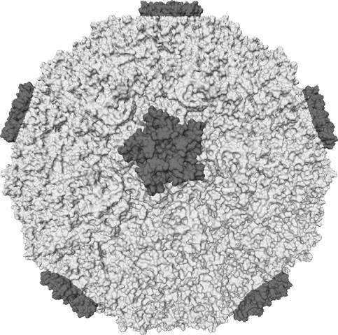 Global Rhinovirus Infections Market Research Report