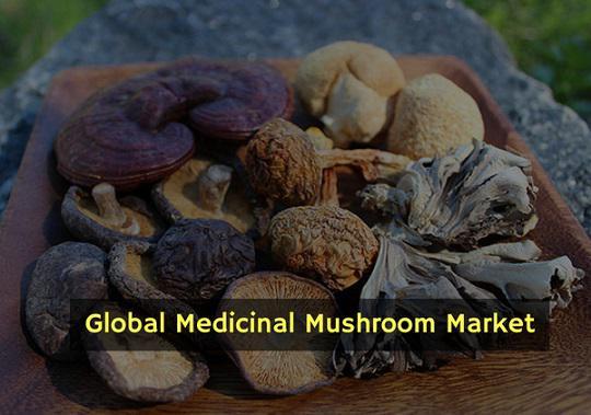 Medicinal Mushroom Market Industry Analysis and Forecast