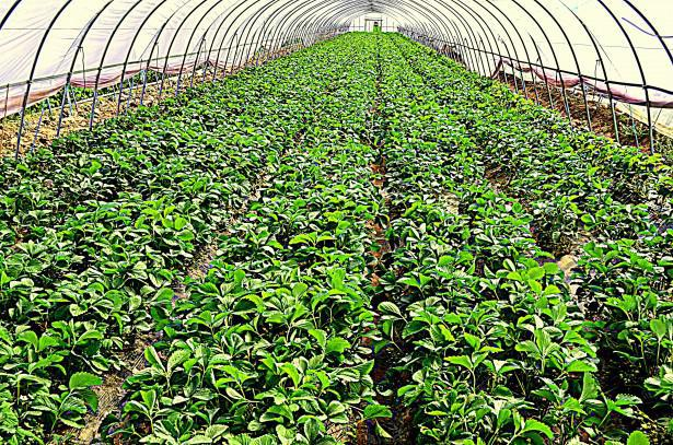 Greenhouse Products Market Global Analysis By Key Players- Lochs Produce and Greenhouse Inc., Mikes Greenhouse Produce Inc., Mitch