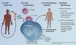 CAR T Cell Therapy Industry