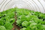 Greenhouse Produce Market | Key Players are Greenhouse Produce