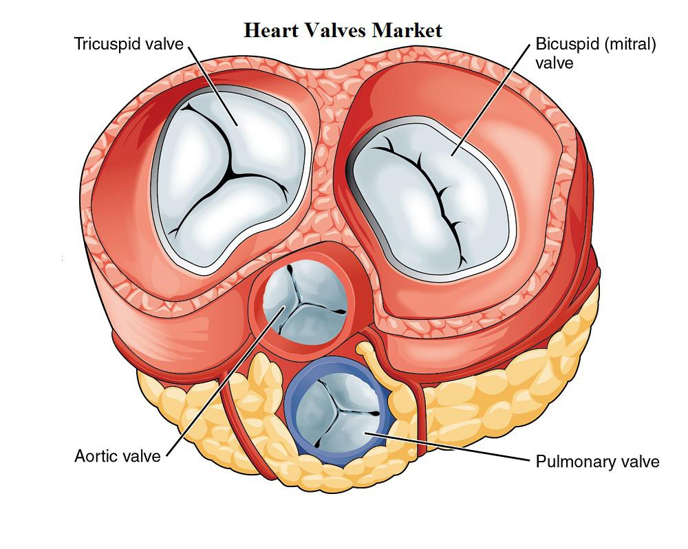 Image result for Mechanical Heart Valves Market Research