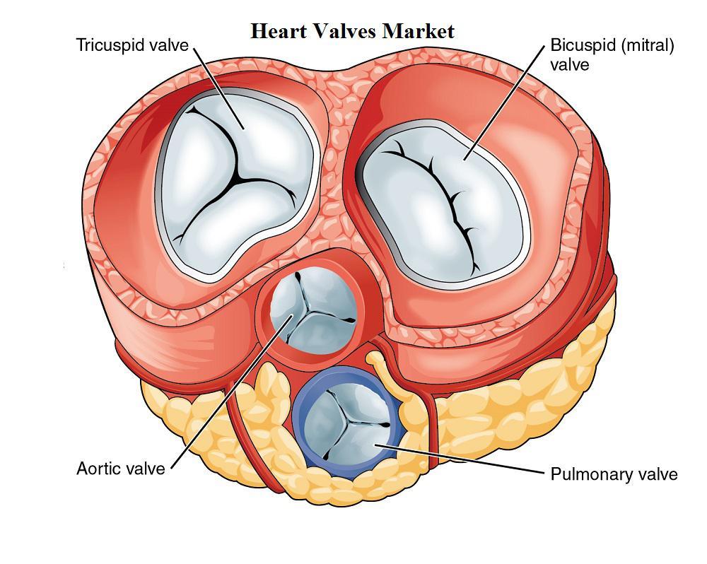 Image result for Mechanical Heart Valves Market Research