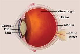 Age-Related Macular Degeneration (AMD) Market
