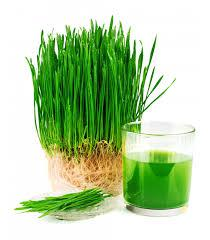Packaged Wheatgrass Products Market