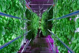 Vertical Farming 2026 Global Market Key Players – Sky Greens