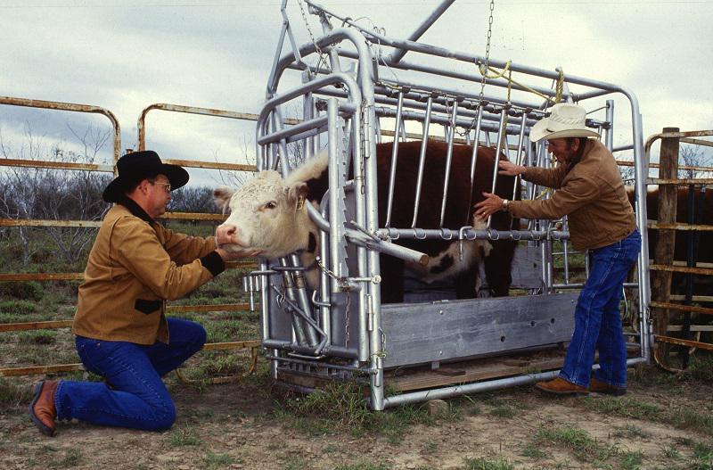 Cattle Health Market