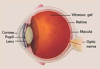 Glaucoma Market