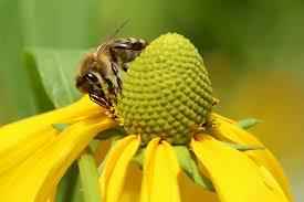 Bee Pollen Market