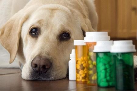 Veterinary Pain Management Market