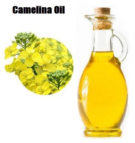 Camelina Oil Market