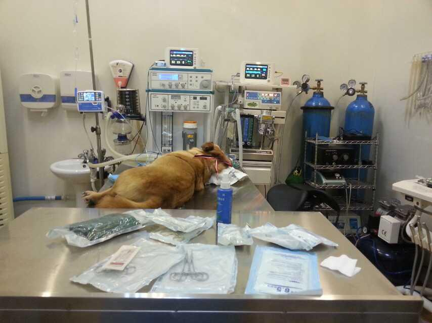 Veterinary Infusion Pumps Market