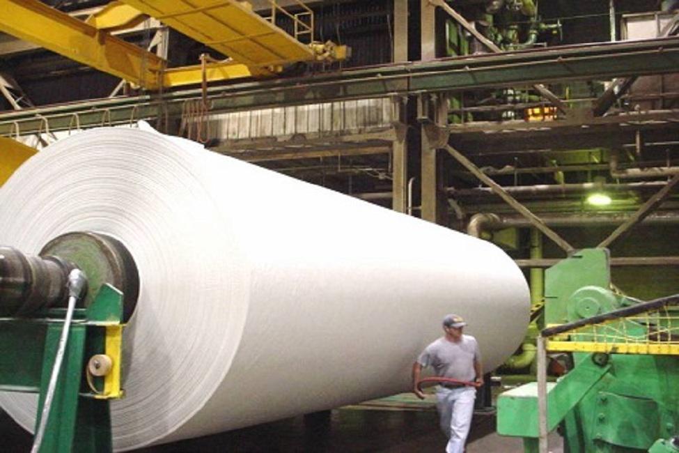 Pulp & Paper Enzymes Market
