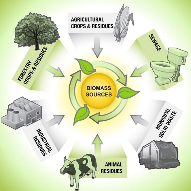 Biomass Energy  Market Global Forecast  2018 | Studied By    Enviva,    Rentech,   Graanul Invest Group,  RWE Innogy