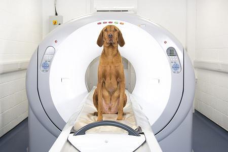 Global Veterinary CT scanner Market
