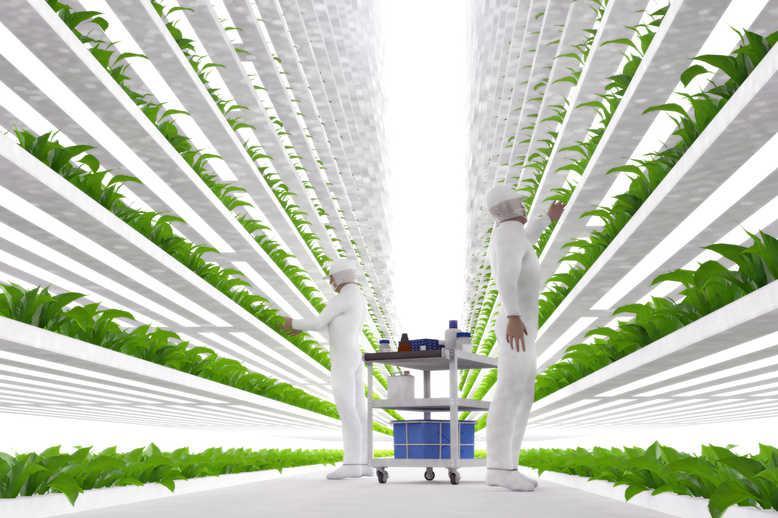 Indoor Farming Technology Market Is Booming Worldwide | Philips