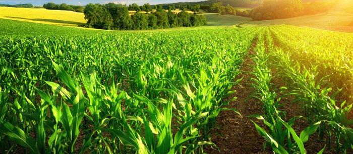 Crop Production Market Report 2018- 2025