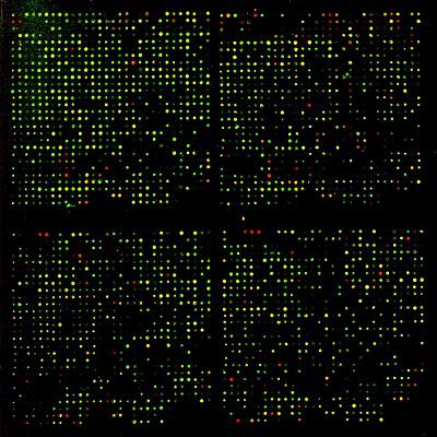 dna microarray