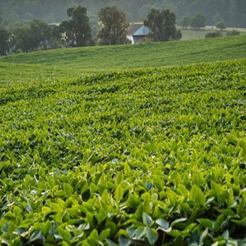 Agricultural Adjuvants Market