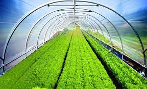 Agricultural Film Market