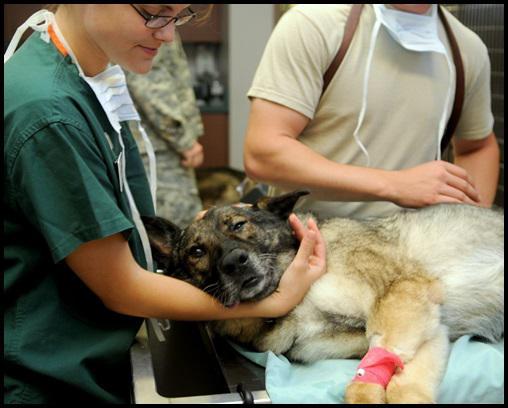 Companion Animal Diagnostic Market