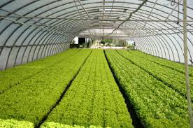 Global Greenhouse Soil Market Scenario 2019-2026 by Estimates