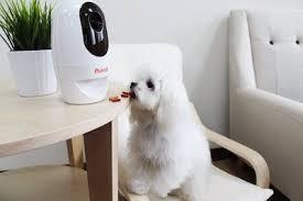 Pet Cameras Market