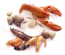 Chitosan Market Is Booming Worldwide | Leading Key Players