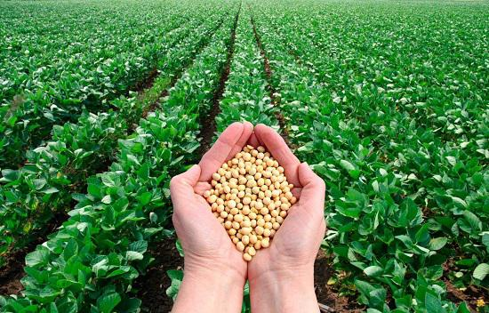 Agriculture Micronutrient