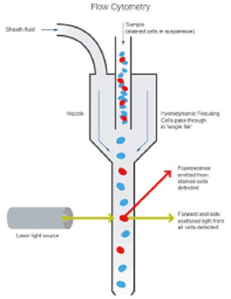 Austria Flow Cytometry Market Analysis & Technological