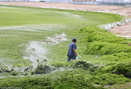 Algae Biofuel Market