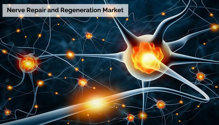 Nerve Repair and Regeneration Market is projected to reach
