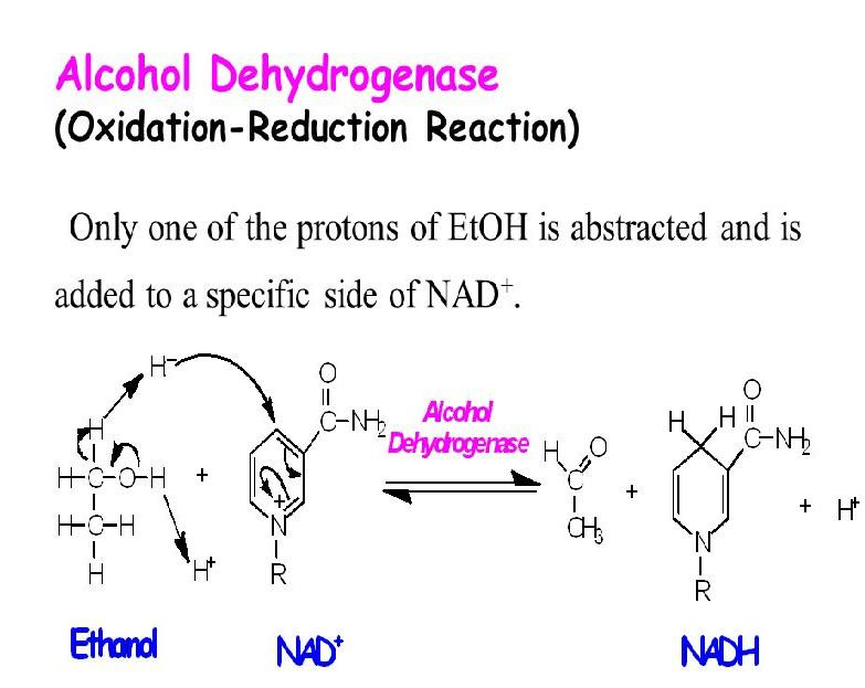 Alcohol Dehydrogenase Market In-Depth Analysis with Booming Trends till 2025 Key Players - Sigma-Aldrich, Worthington Biochemical,