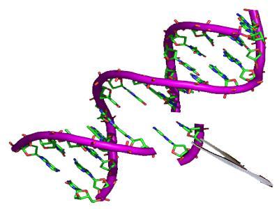 Veterinary Molecular Diagnostics Market