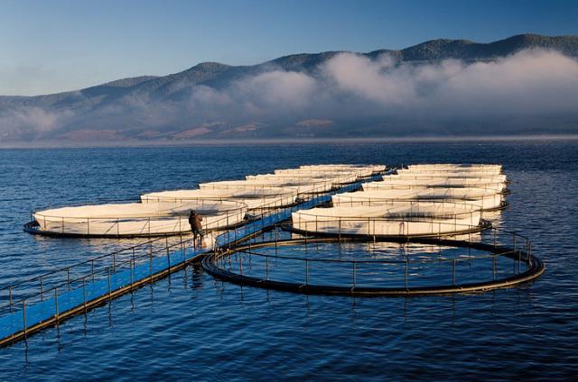 Marine Water Aquaculture Market