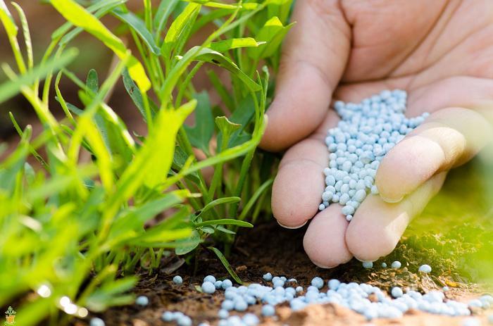 Slow Available Fertilizers Market