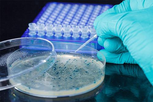 Viral Vector and Plasmid DNA Manufacturing Market