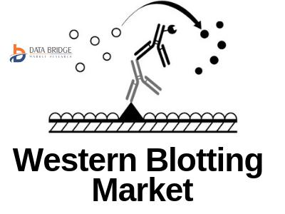 CAGR 5.10% Growth Predicted in Western Blot by 2024   A report