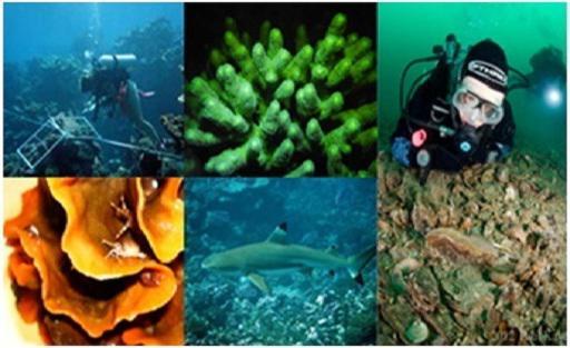 Global Marine Biotechnology Market 2019-2025