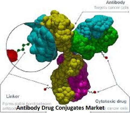 Antibody Drug Conjugates Market Analyzed Globally by Top key