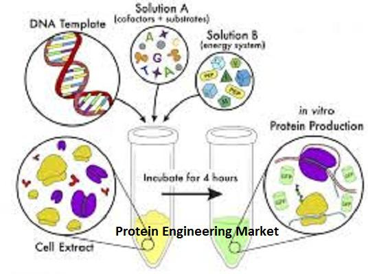 Protein Engineering Market 2019 Analyzed by Top 5 Key Players