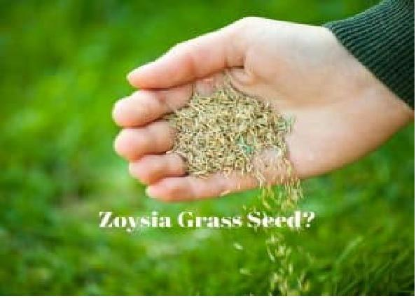 Zoysia Grass Seed Market 2019 Key Player Analysis – Stover Seed, Seedland, Hancock Seed, J.R. Simplot, Pennington Seed, Seed Ranch