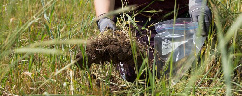 Global Forage Analysis Market– Industry Trends and Forecast to 2026