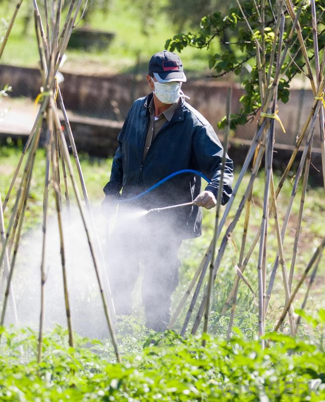 Pyrethroid Pesticide Market Research Report 2019-2025