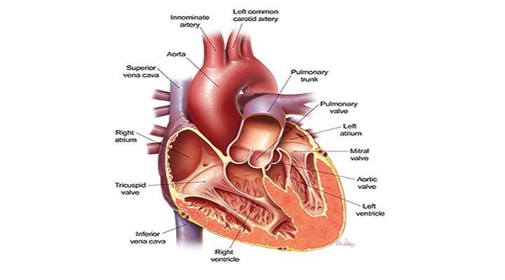 Prosthetic Heart Valves Market