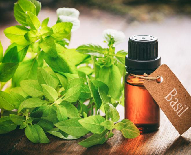 Basil Extracts Market Growth by Top Key Players - NOW Foods,