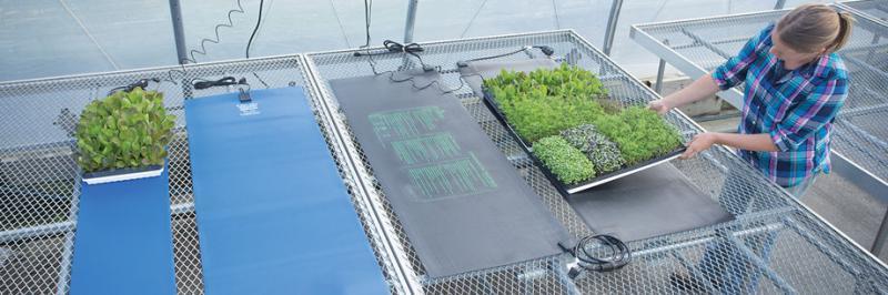 Seedling Heat Mat Market