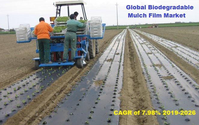Global Biodegradable Mulch Film Market