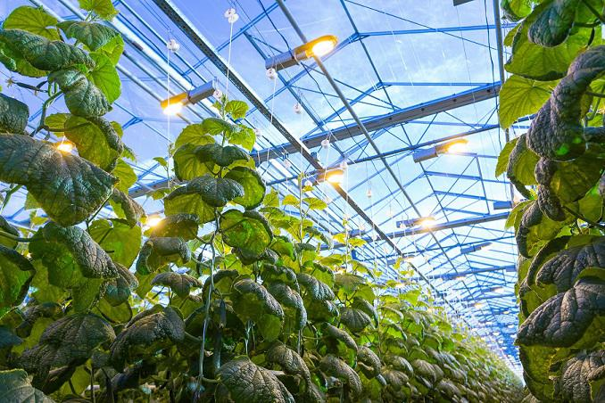 DLC approves SGS for Testing and Certification of Horticultural